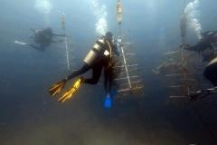 reef-restoration11