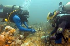 reef-restoration12