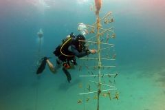 reef-restoration13