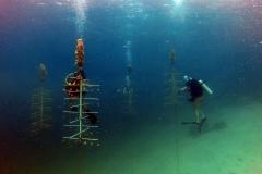 reef-restoration14