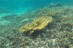 reef-restoration2