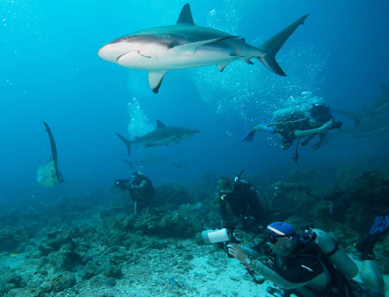 Roatan Shark Dive Subway Watersports