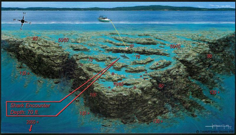 Roatan shark dive subway watersports - Roatan dive sites ...